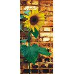 Φωτοταπετσαρία Πόρτας Sunflower