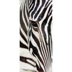 Φωτοταπετσαρία Πόρτας Zebra