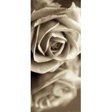 Φωτοταπετσαρία Πόρτας Rose FT V 1508