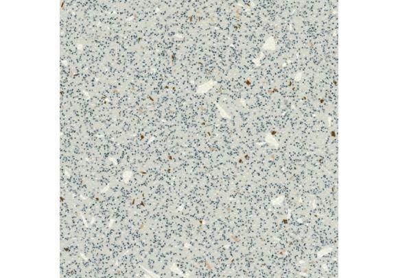 Πλαστικό Δάπεδο Grabo Ecosafe 1017-664 Εκρού